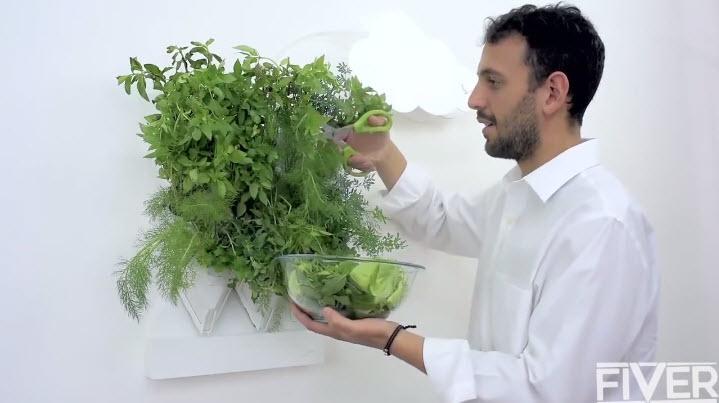 trồng rau trên tường