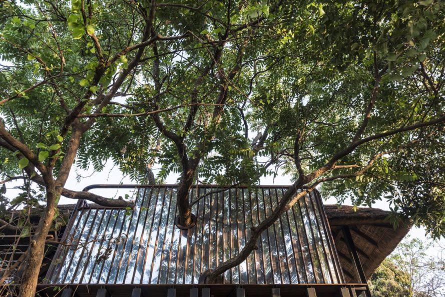 Biệt thự trên cây