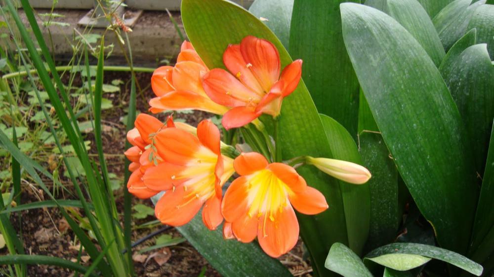 hoa lan quân tử