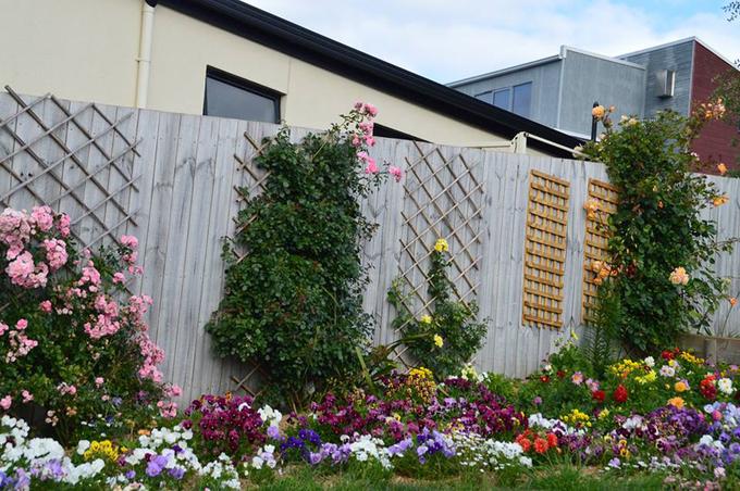trồng hoa quanh nhà