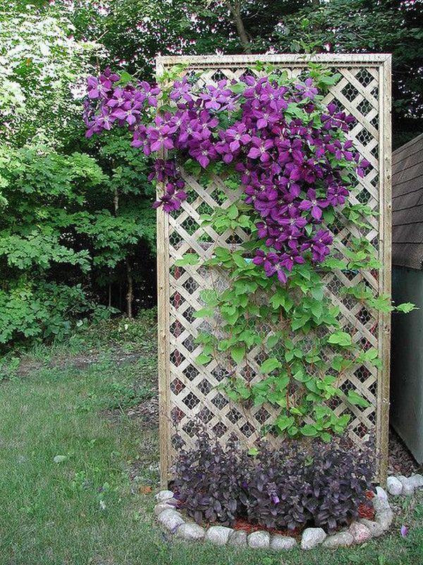 làm đẹp sân vườn