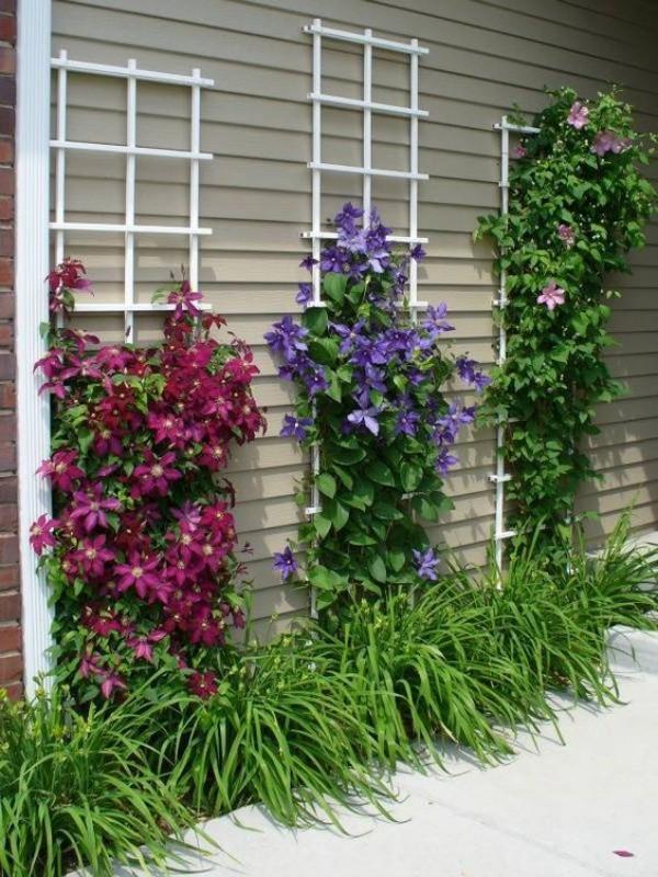 làm đẹp vườn nhà
