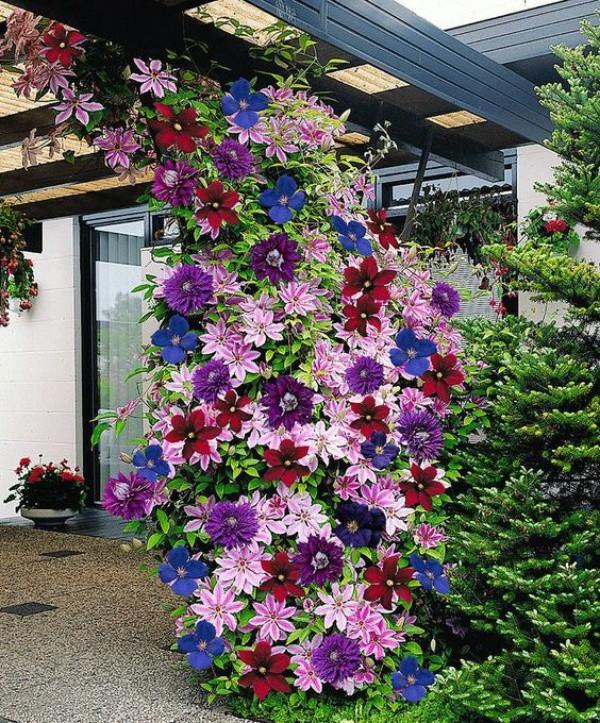 cách làm đẹp vườn nhà