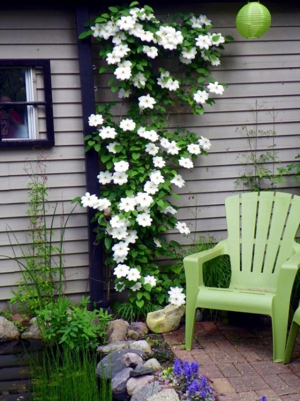 mẹo  làm đẹp sân vườn hay