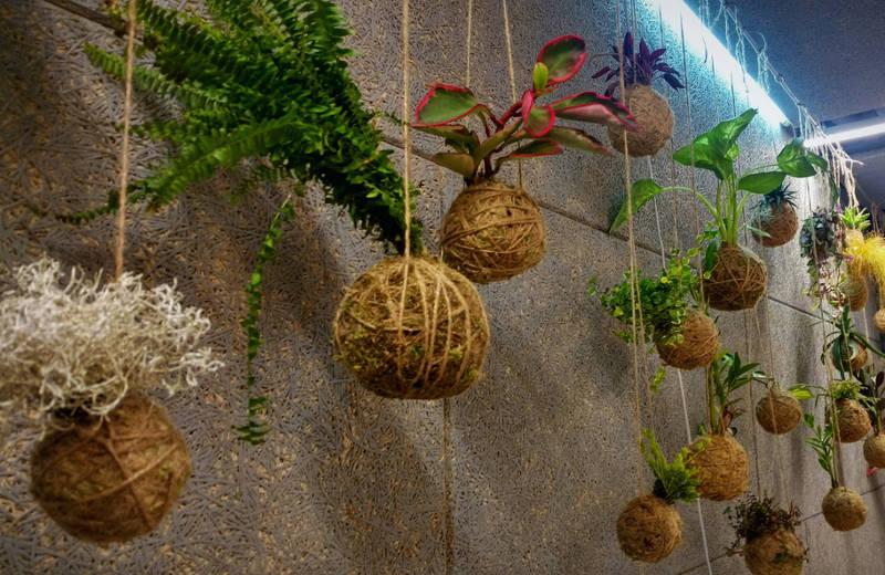 trồng cây trong bóng rêu Kokedama