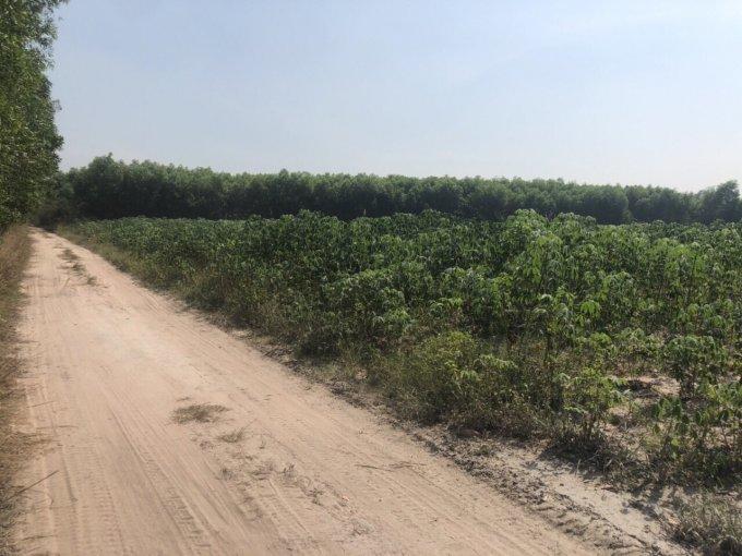 đất nông nghiệp Nhơn Trạch