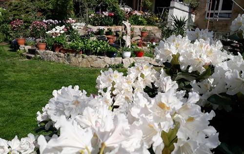 vườn hoa ấn tượng