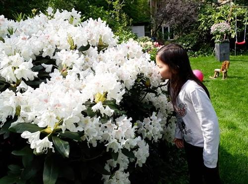 vườn hoa đặc sắc