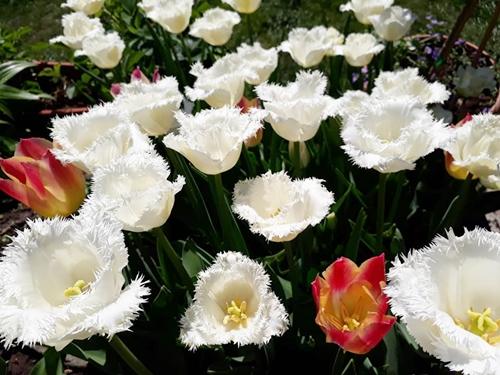 vườn hoa xinh
