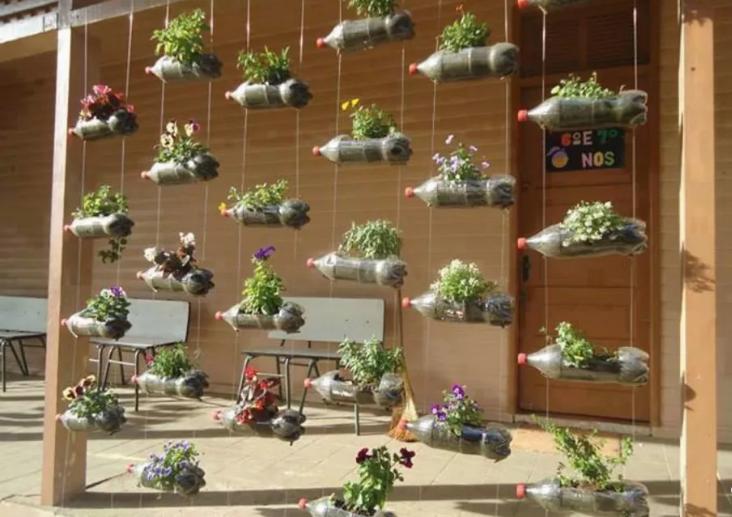 trồng cây bằng chai nhựa