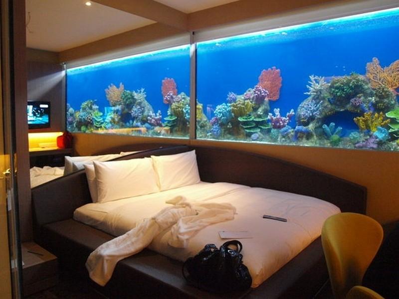 đặt bể cá trong phòng ngủ