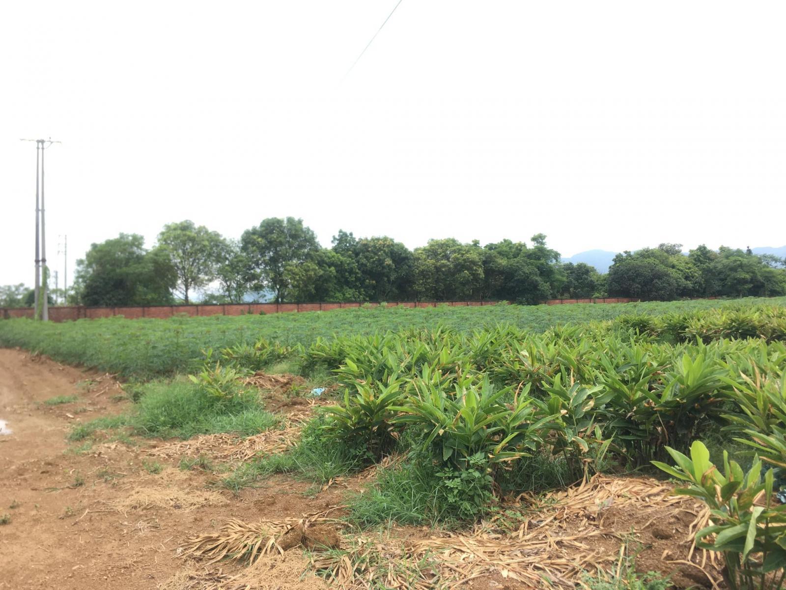 đất nông nghiệp tại Quốc Oai