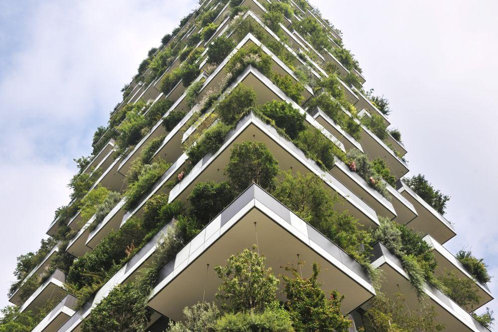 trồng cây trên cao