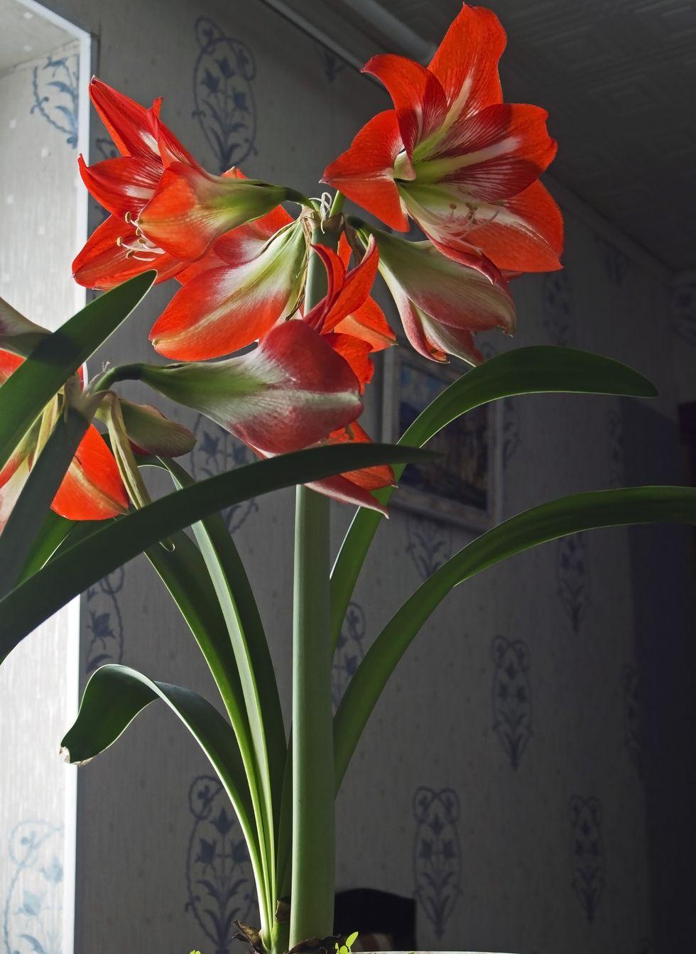 Trồng hoa trong nhà theo mùa