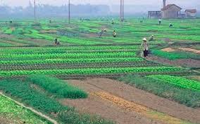 Người dân phải nộp bao nhiêu tiền khi chuyển từ đất nông nghiệp sang đất ở?