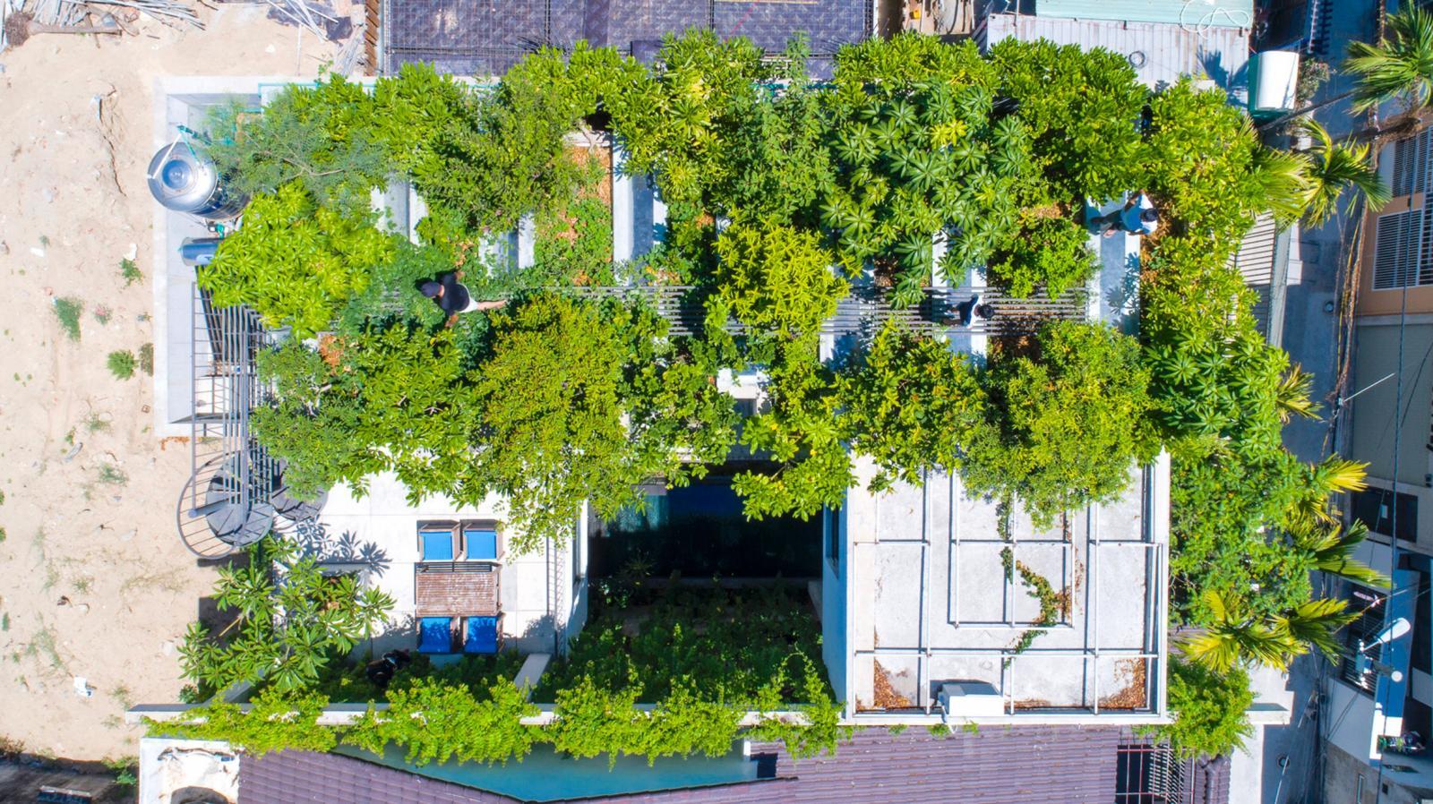 ngôi nhà phủ đầy cây xanh