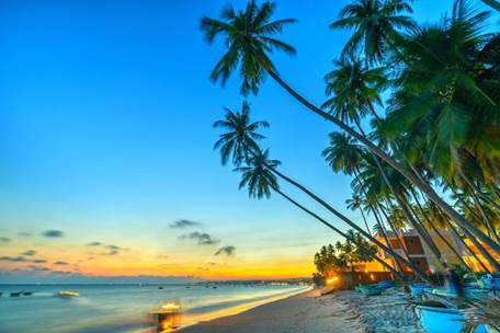 Ảnh bãi biển với hàng dừa nghiêng