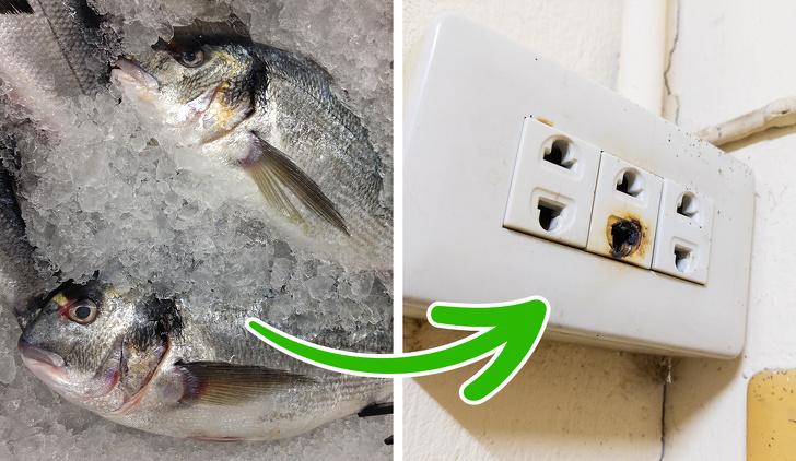 cá đông lạnh và ổ cắm điện cháy khét