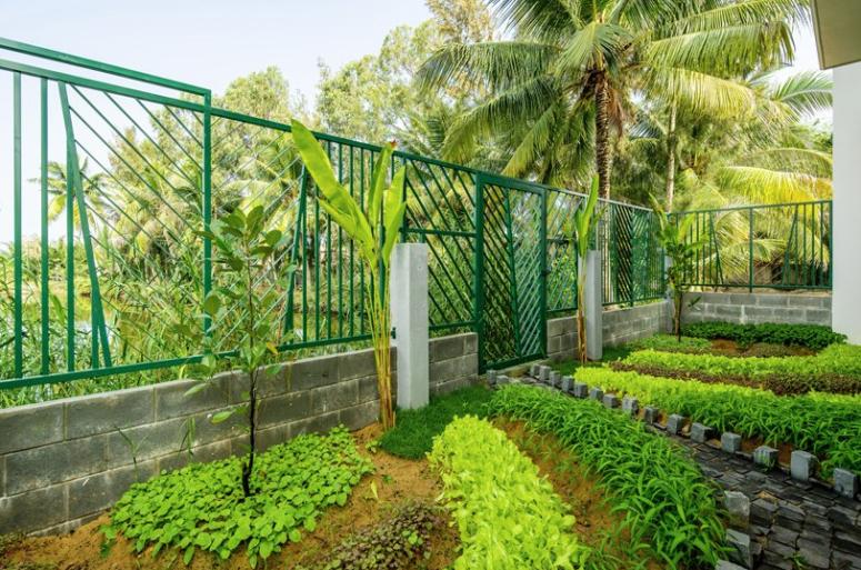 vườn trồng rau sạch