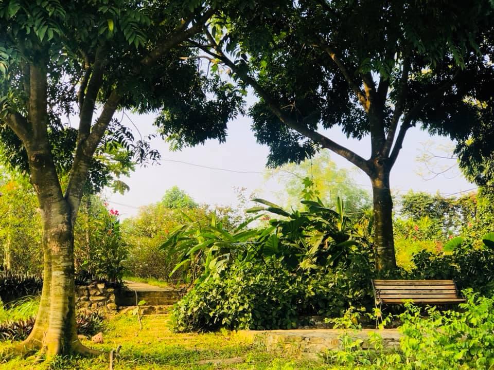 Khu vườn nhiều cây xanh