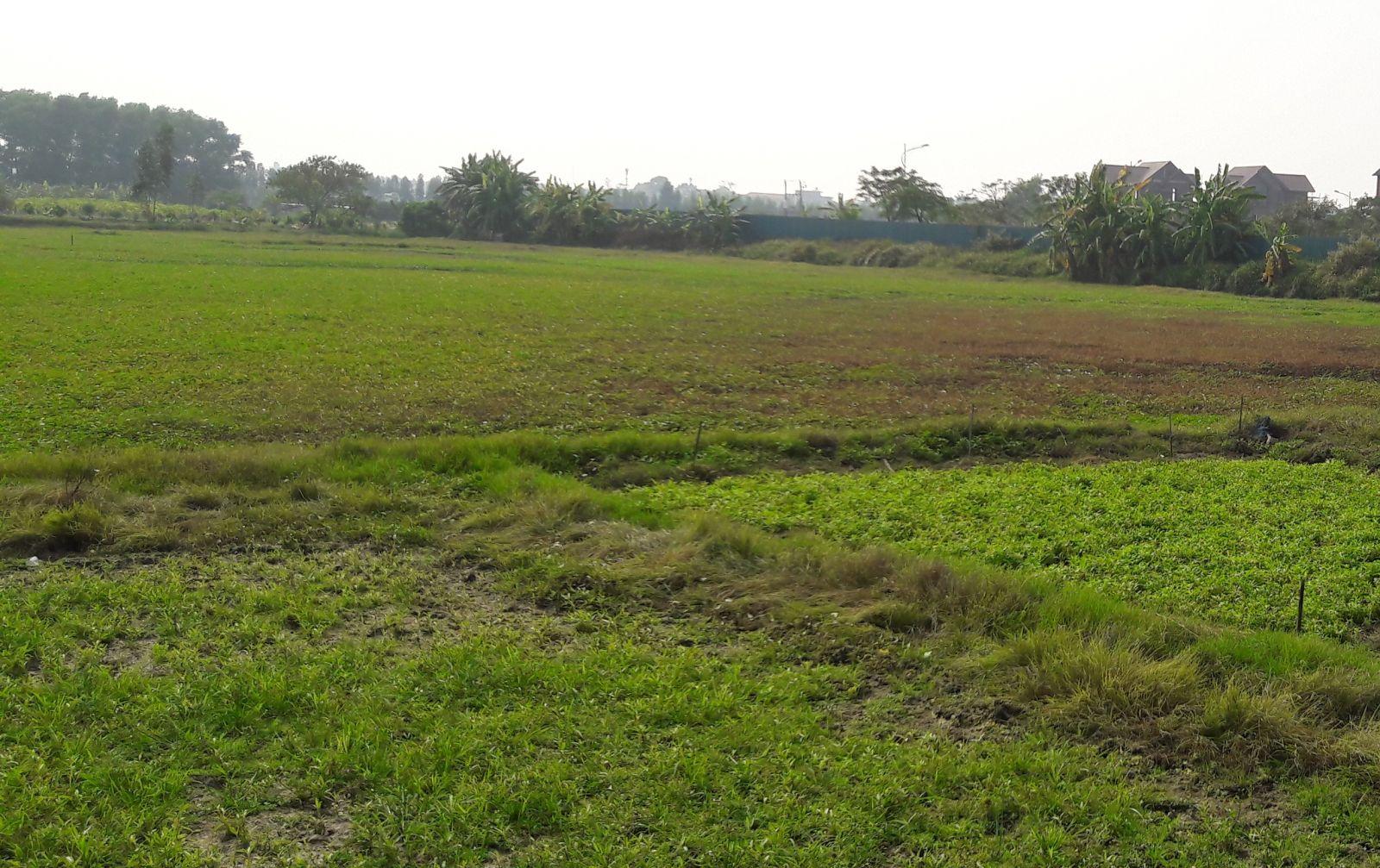 khu đất nông nghiệp