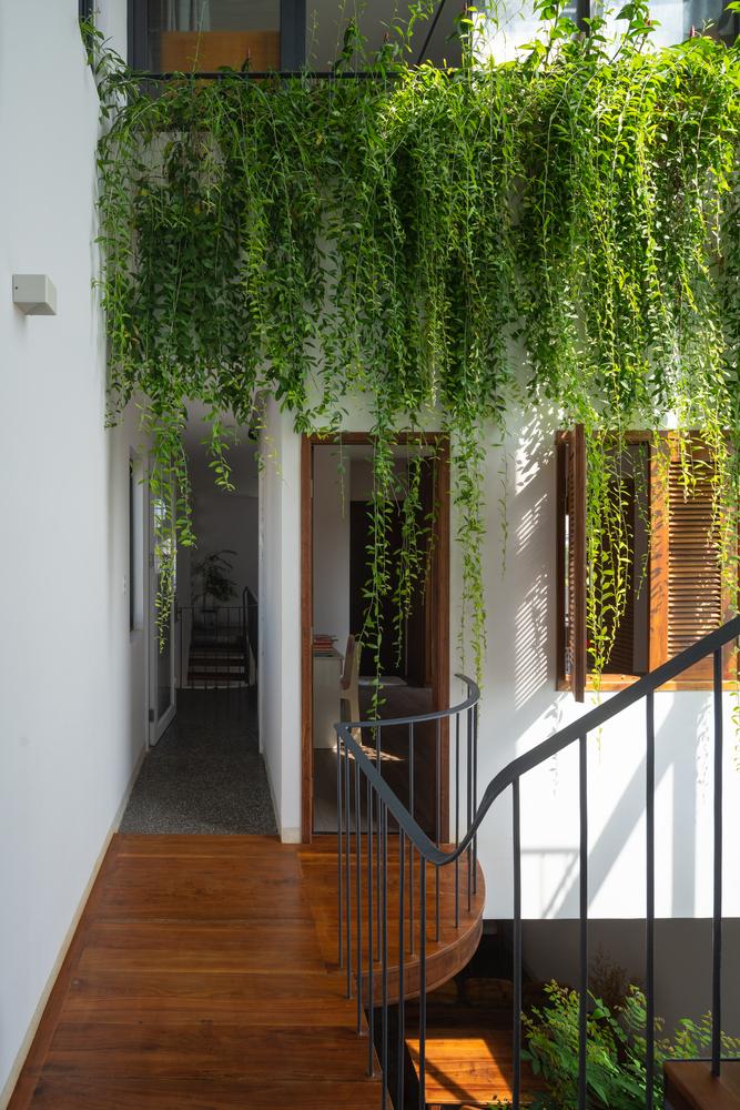 Tán cây xanh mọc ra từ ban công tầng trên, rủ xuống cầu thang
