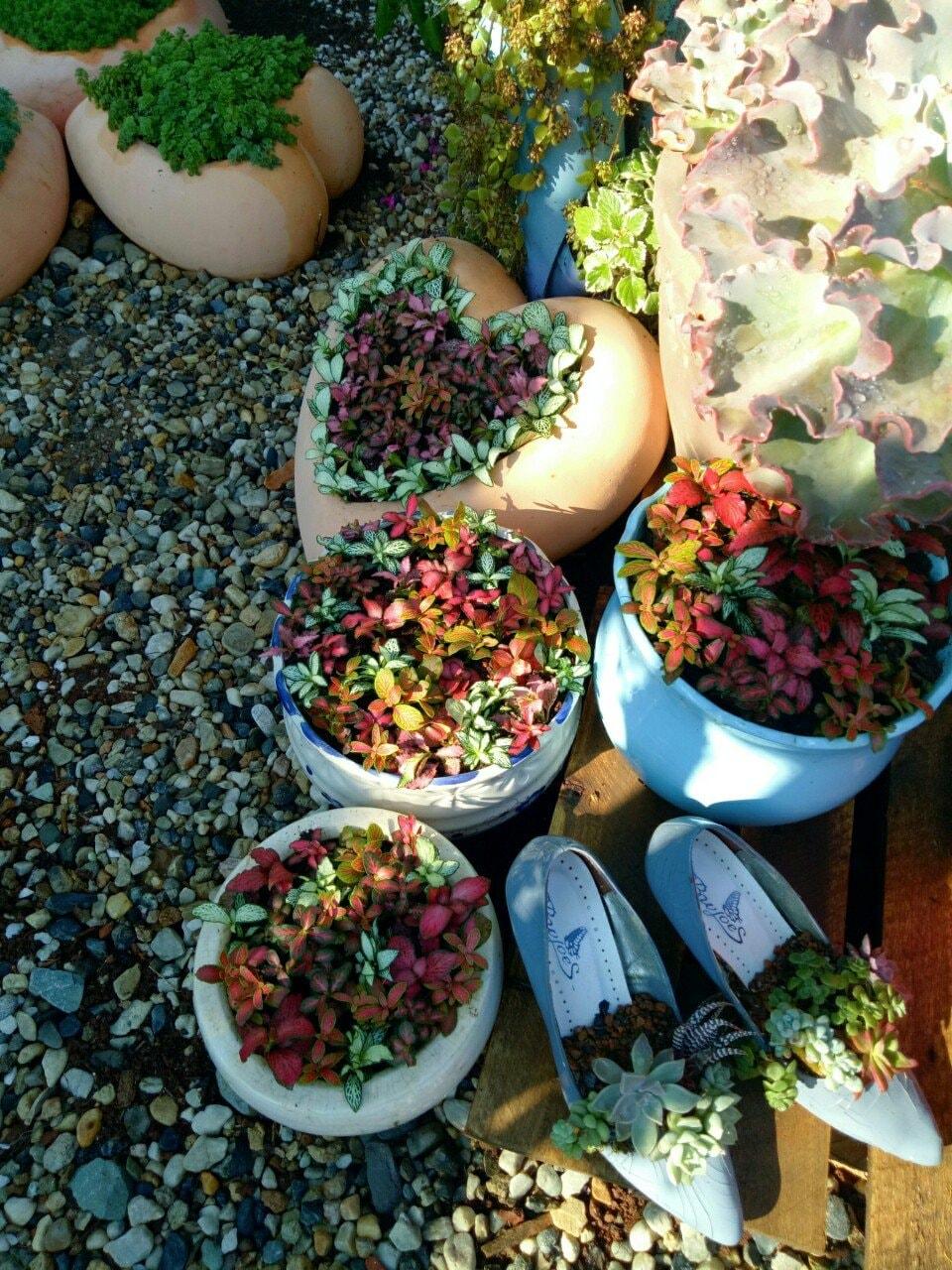 Cây cảnh trồng trong chậu hình trái tim và đôi giày cũ