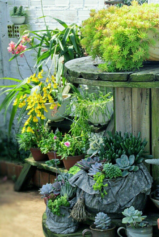 Góc vườn trồng sen đá và hoa cỏ