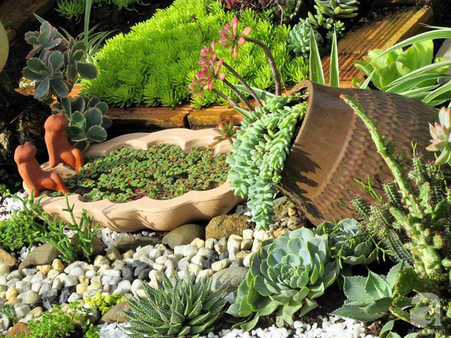 Nhiều giống sen đá trồng trong bình gốm
