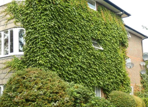 Giàn cây thân leo bao phủ bên ngoài ngôi nhà