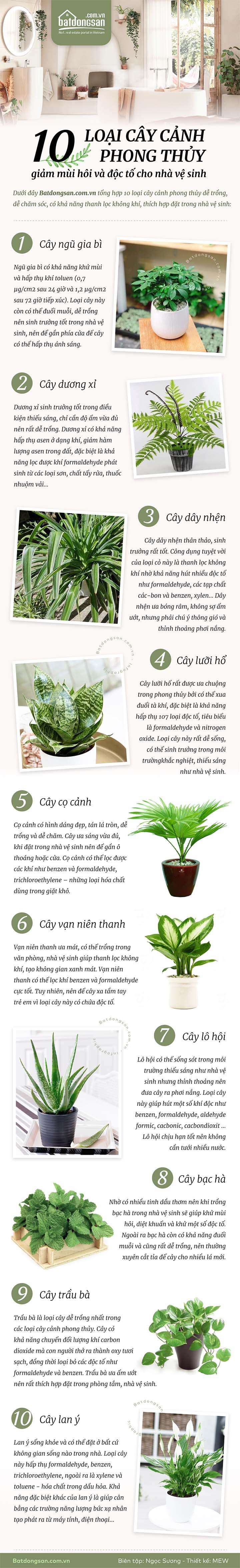 Infographic mô tả 10 loại cây cảnh phong thủy thích hợp đặt trong nhà vệ sinh