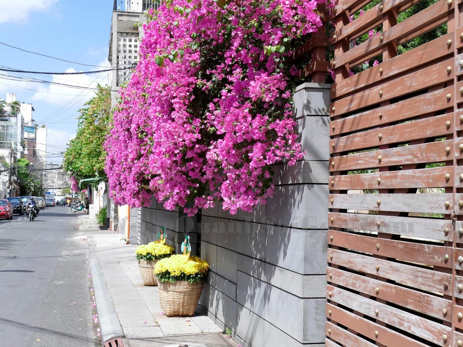 Giàn hoa giấy đẹp chống nắng cho nhà hướng Tây
