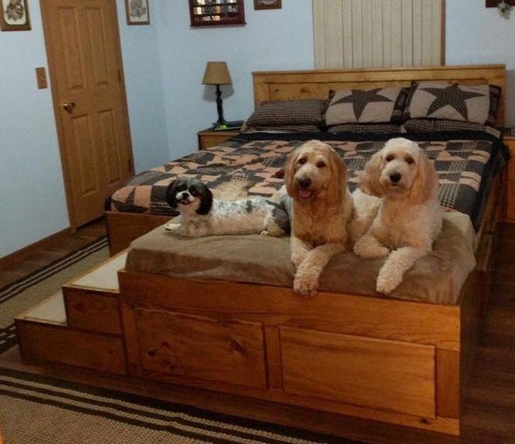 Thiết kế mở rộng giường ngủ cho người yêu chó