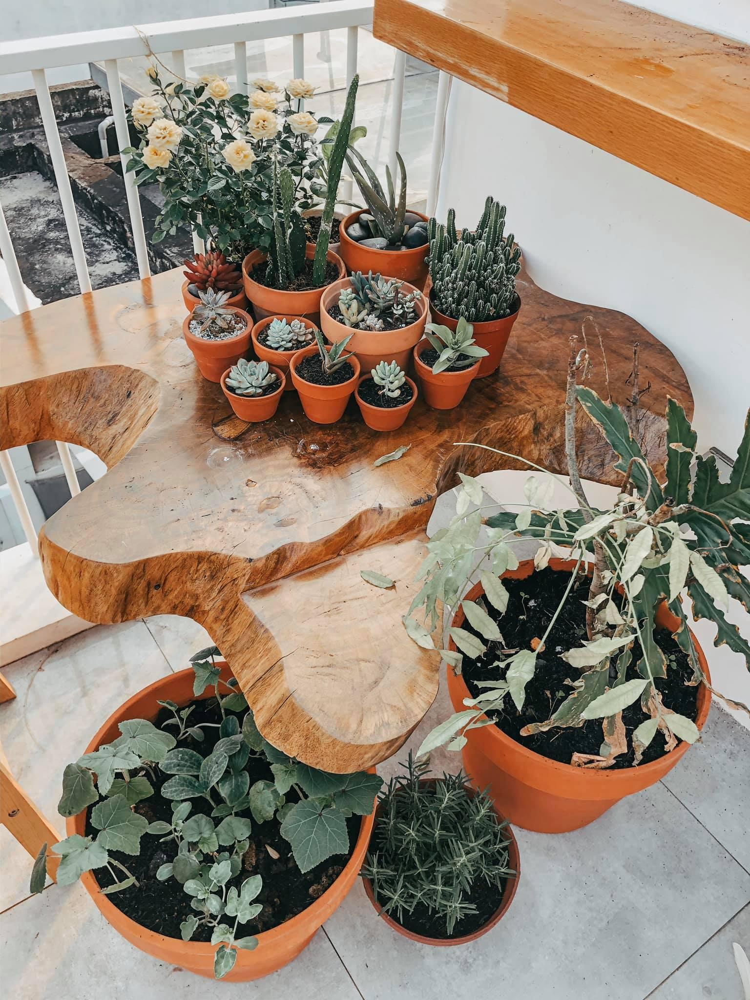 Những chậu cây hoa và cây cảnh trên bàn gỗ trang trí