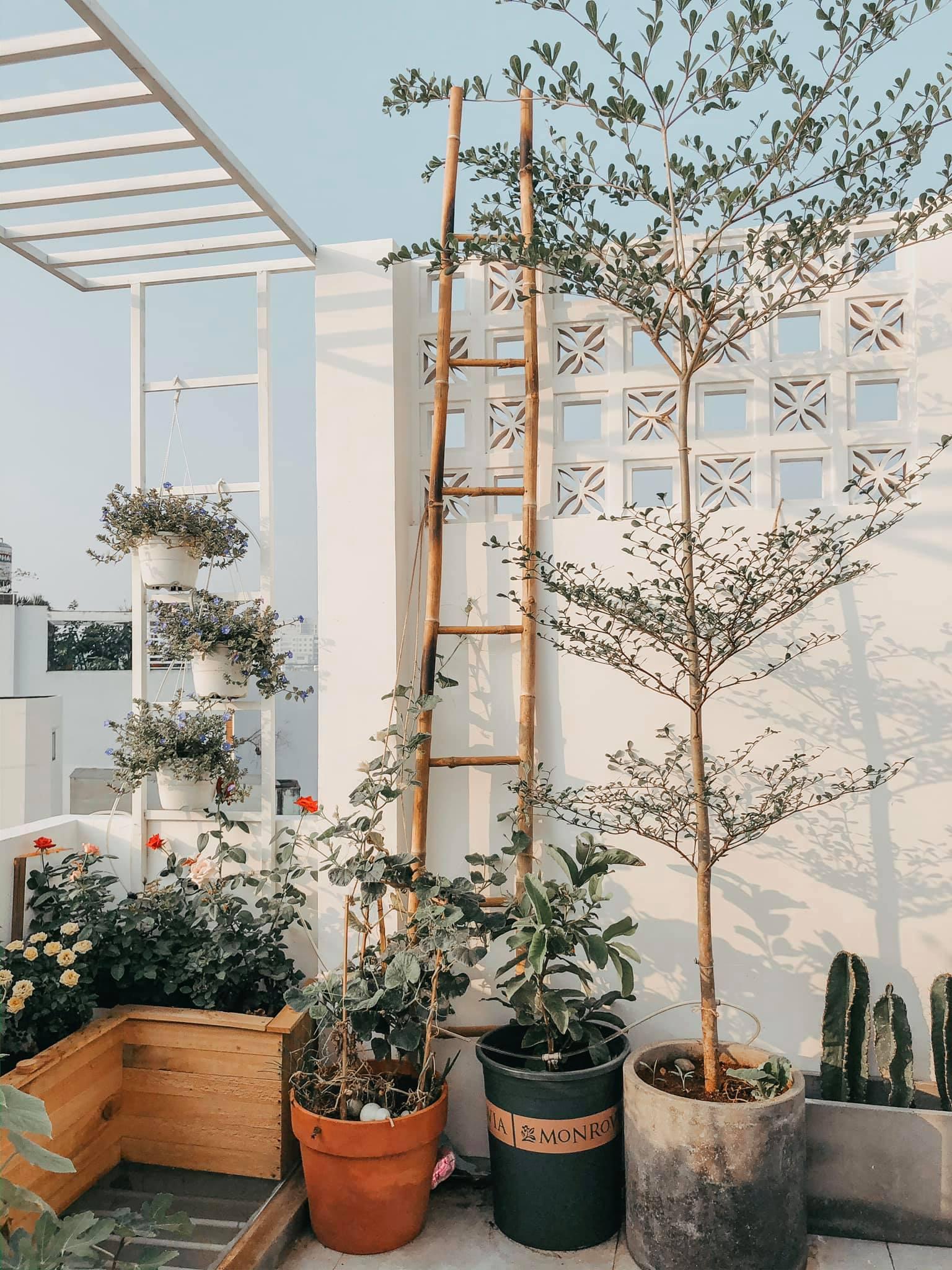 Khu vườn nhỏ trồng cây cảnh trên sân thượng