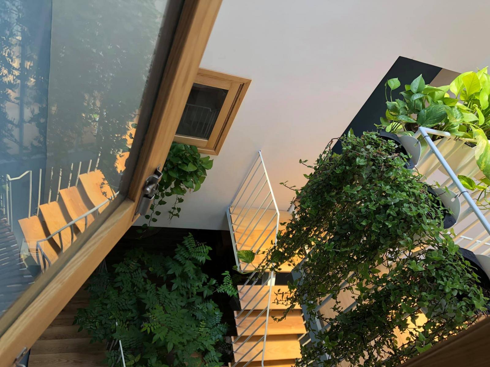 Không gian xanh mát bên trong ngôi nhà phố