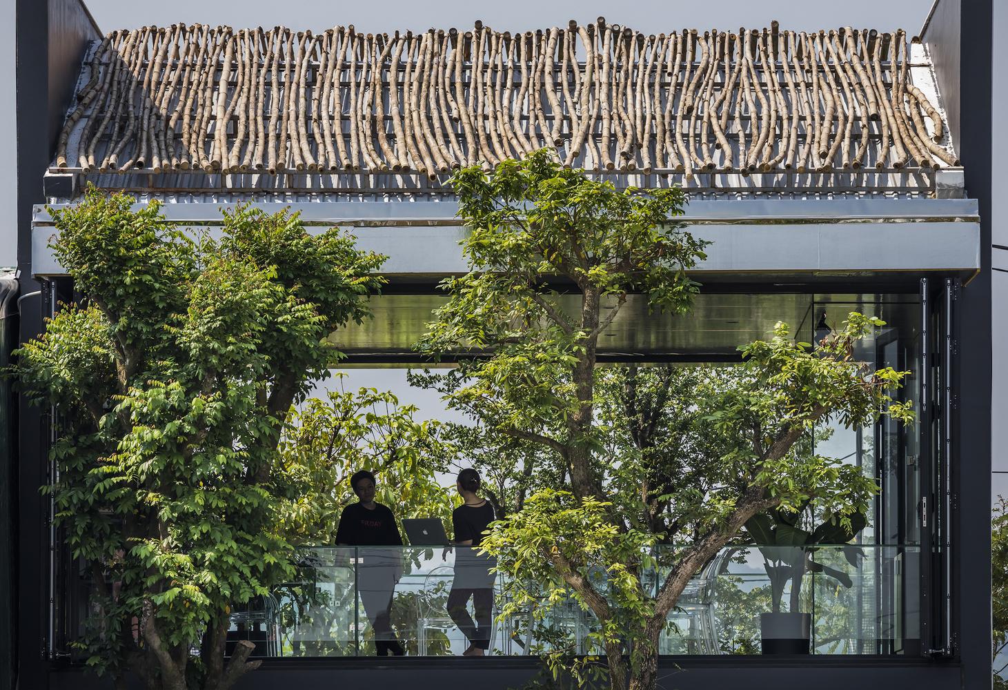 Thiết kế văn phòng mở nhiều cây xanh