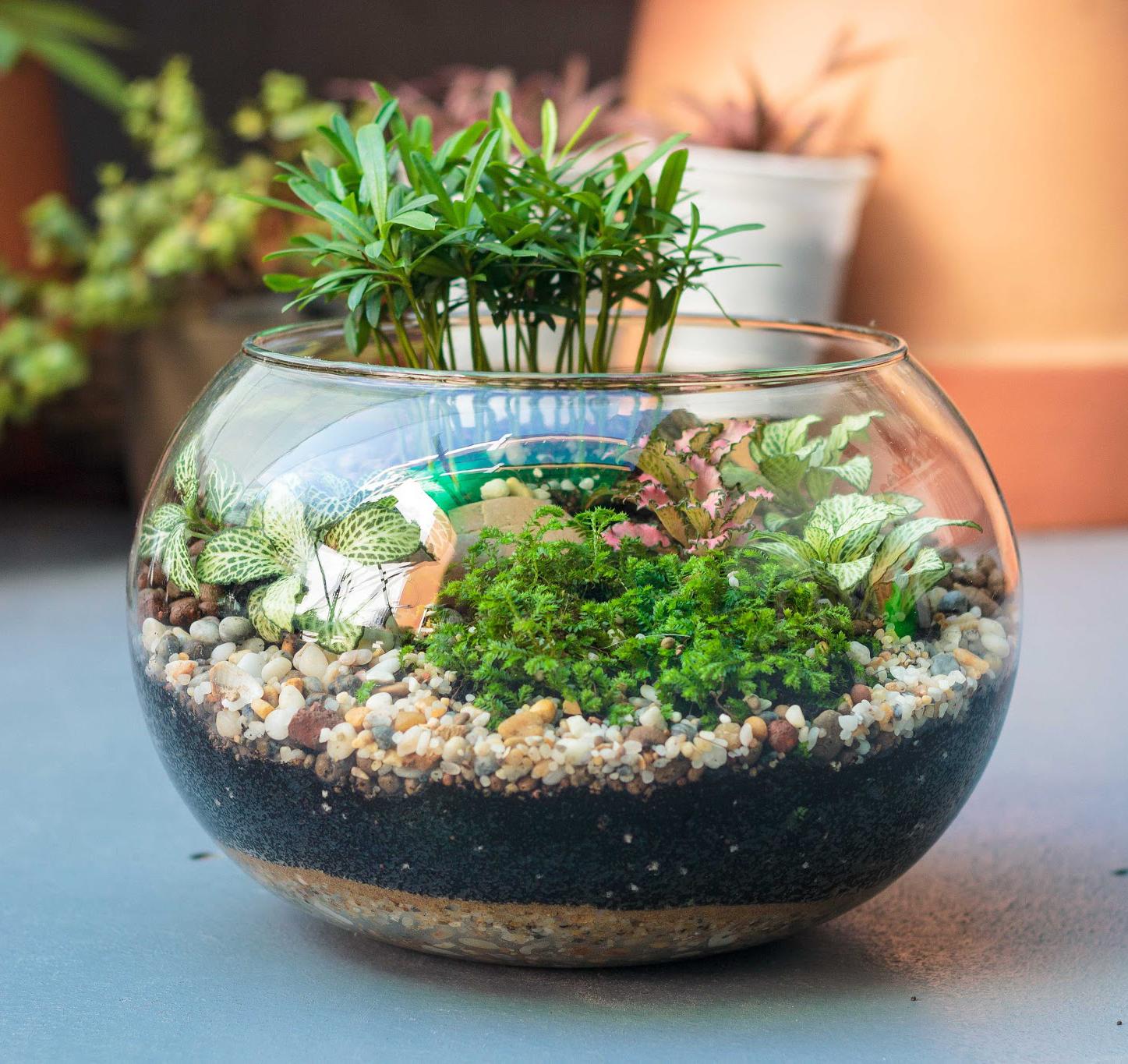 Bể cá, bể thủy sinh mini