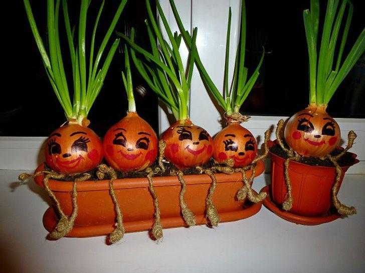 Hành tây trồng trong chậu