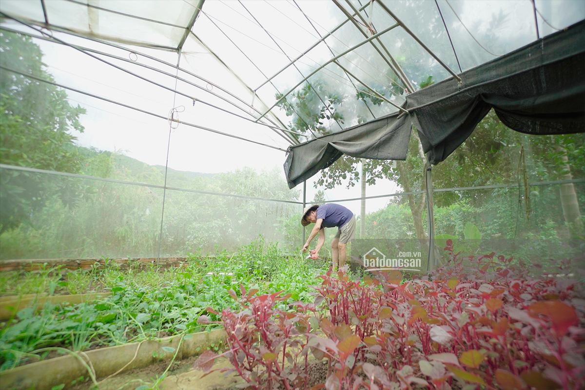Gia chủ chăm sóc vườn rau sạch
