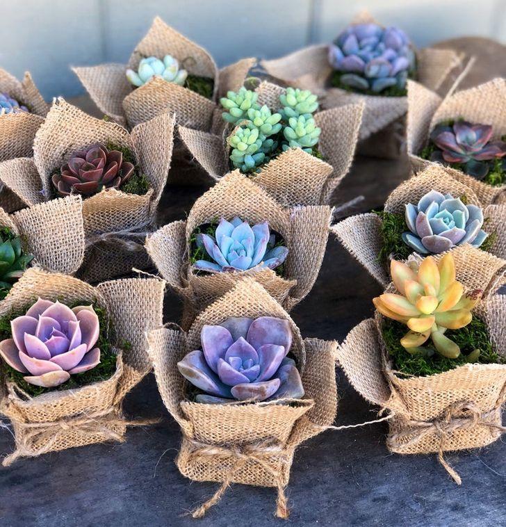 Sen đá mini gói thành bó hoa