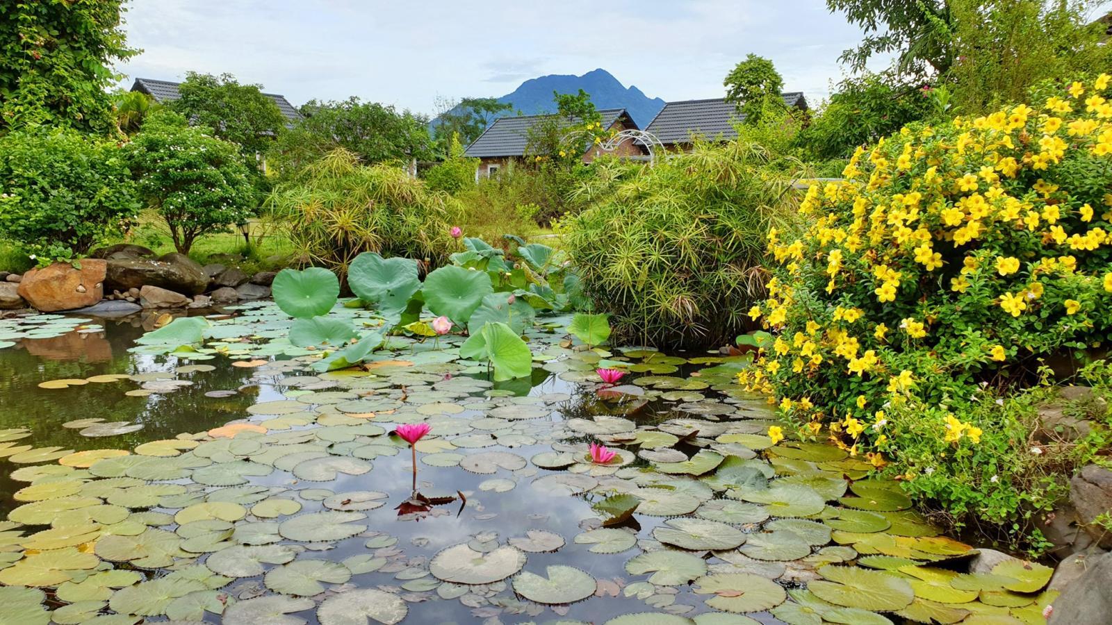 Hồ sen nhỏ trước nhà