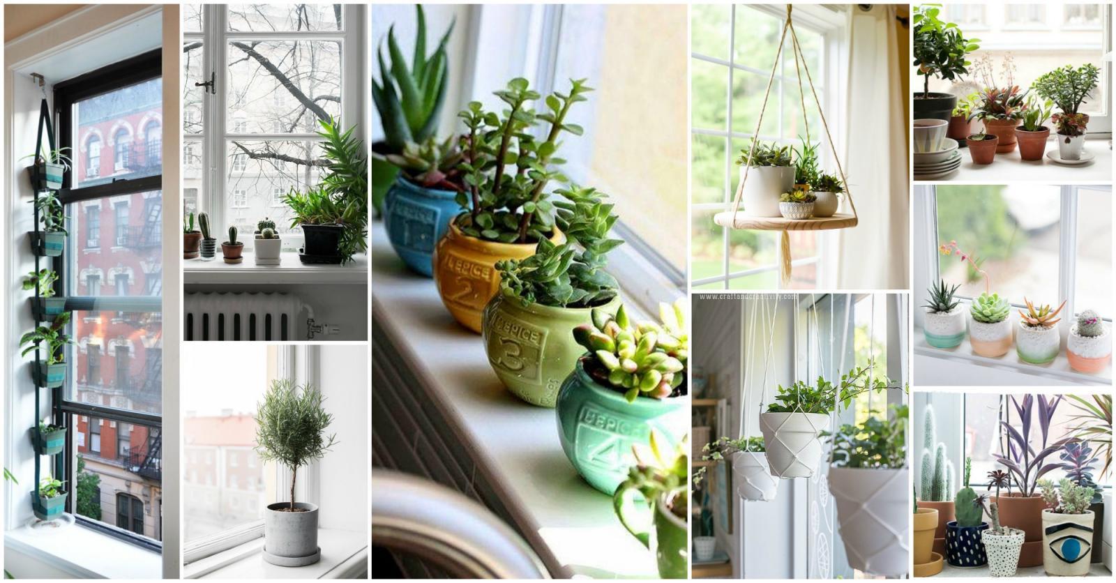 các mẫu cây cảnh đẹp trong nhà