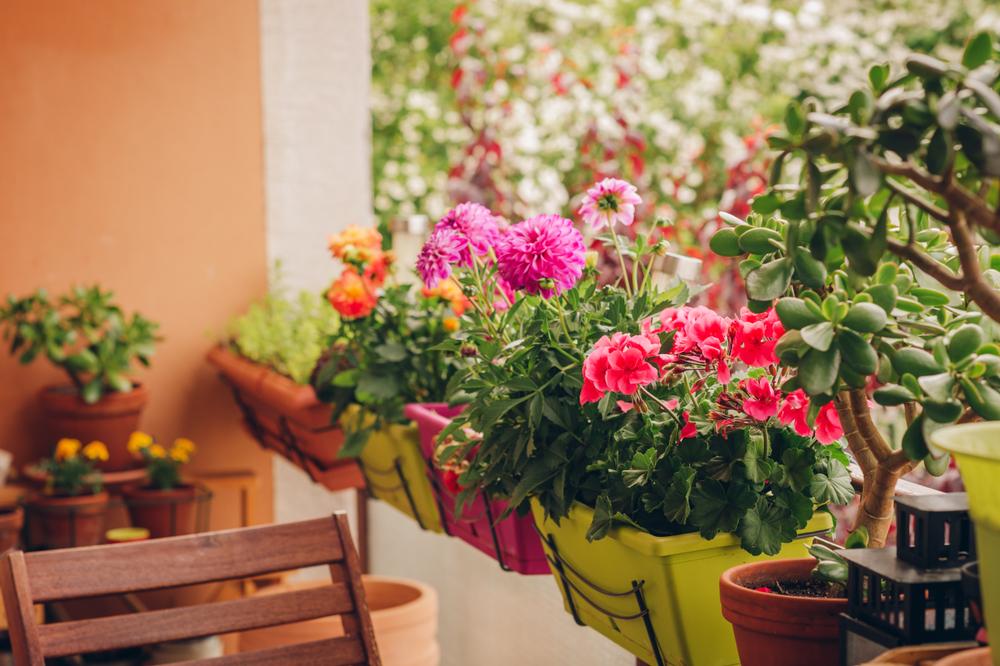 hoa trồng ban công đẹp