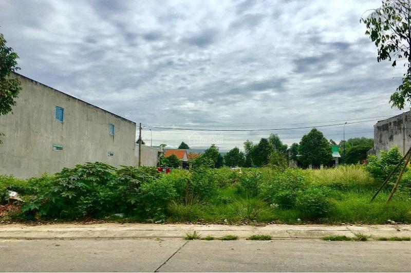khu đất phân lô nằm cạnh đường, có nhiều cây cối