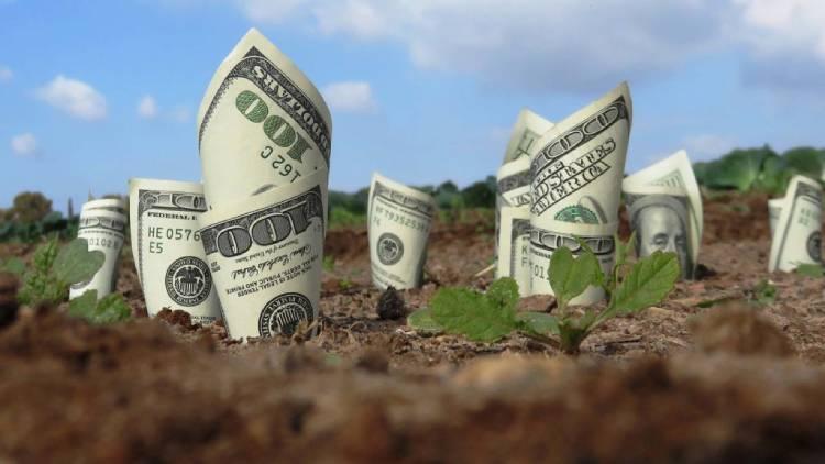 một khu đất mọc lên những tờ tiền, minh họa cho tài sản gắn liền với đất