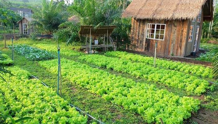 chuyển đổi đất nông nghiệp sang đất ở