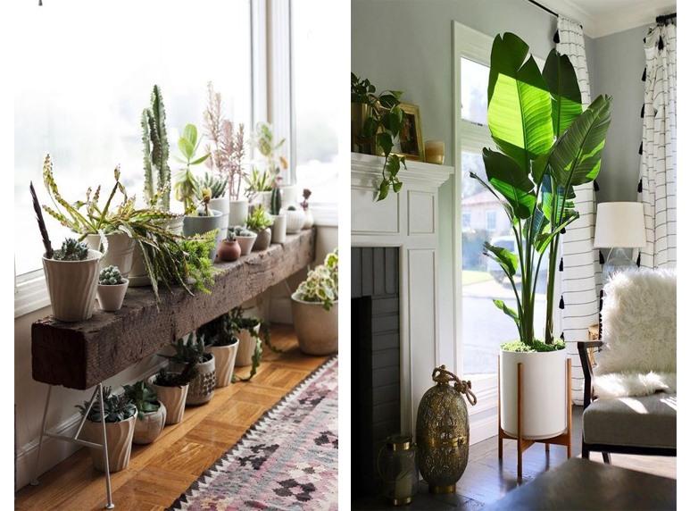 Chọn hoa tươi, cây cảnh để trang trí cửa sổ phòng khách