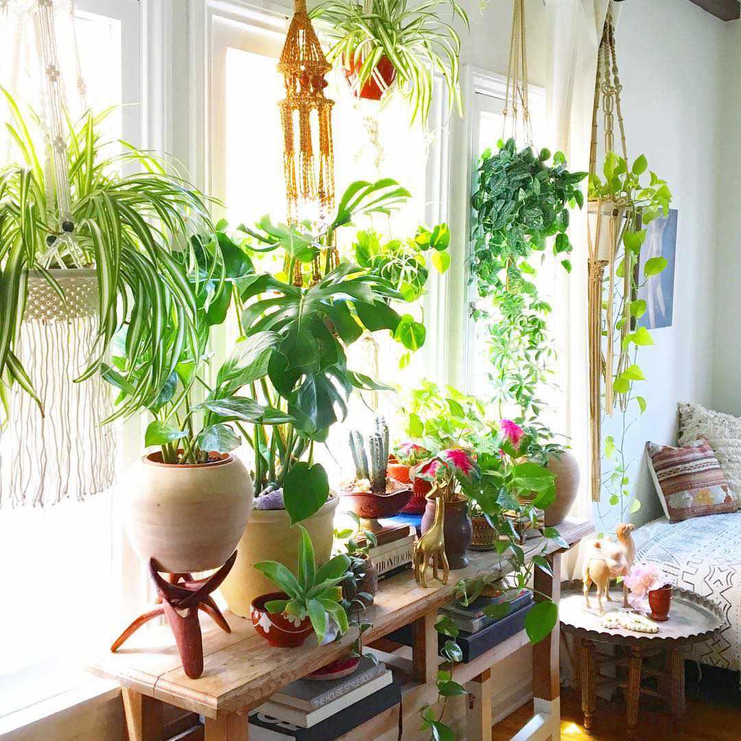 trang trí cửa sổ bằng cách treo các giỏ cây