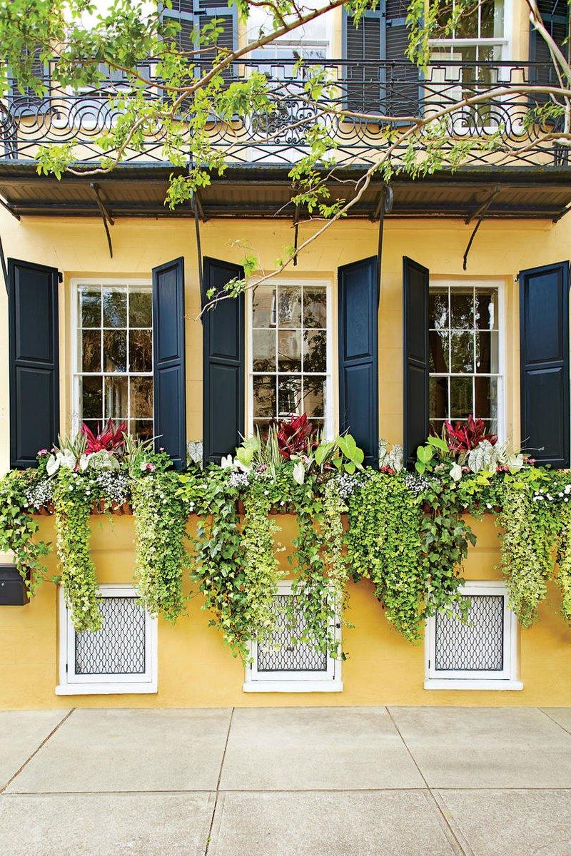 Bạn có thể để các loại cây tự leo ra ngoài cửa sổ để tăng thêm sức sống cho căn phòng